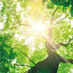 Tree of Life, die Baumbestattung im eigenen Garten.