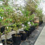 Tree of Life macht die Baumbestattung im eigenen Garten möglich.